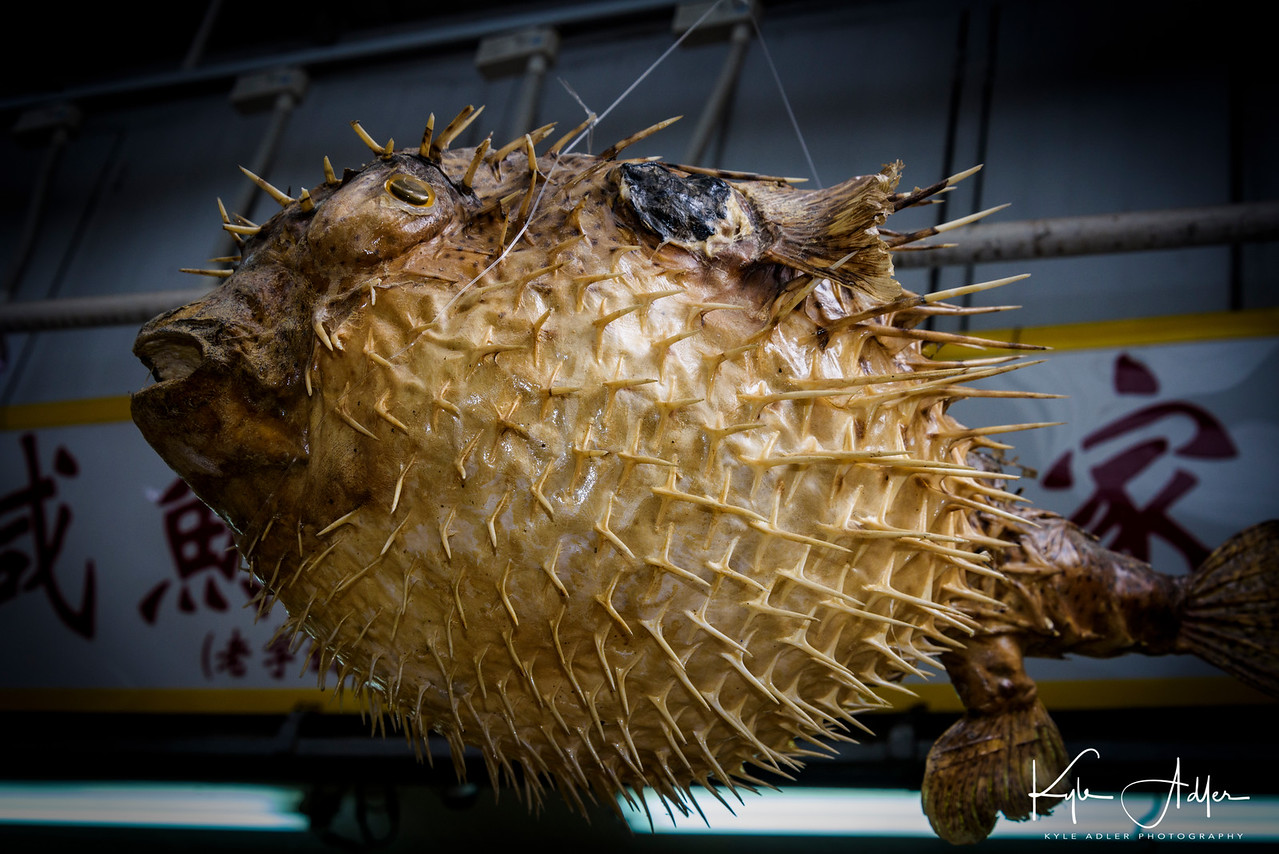 We spent our second day in Hong Kong making a full-day excursion to Lantau Island.  Walking around an ancient fishing village we encountered this giant blowfish for sale in a shop.