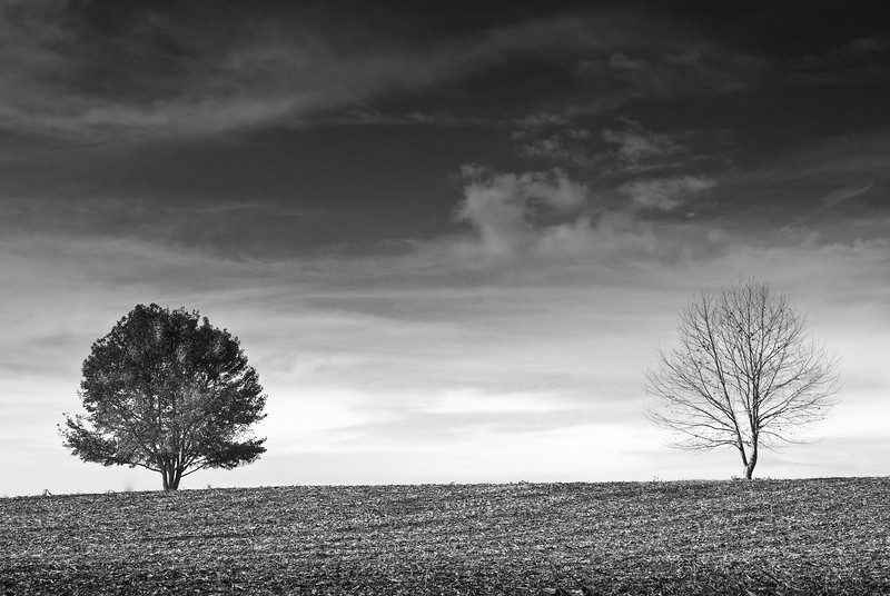 TreesResized