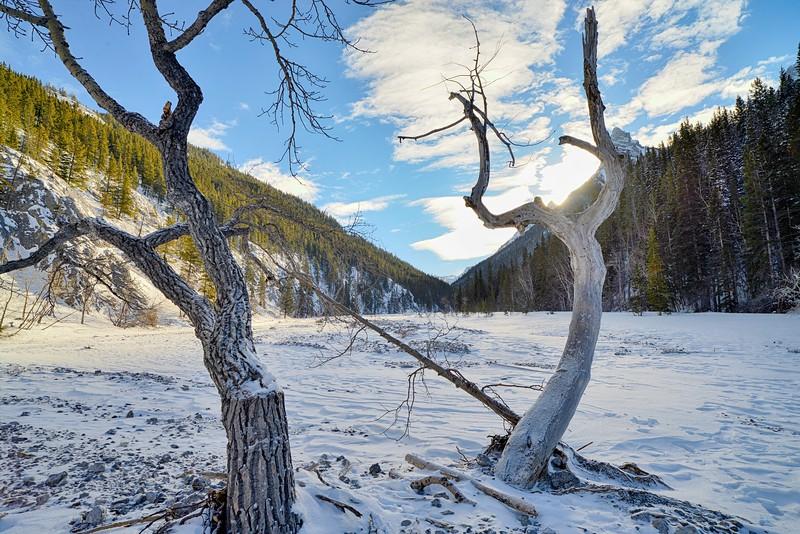 Winter day in Alberta