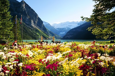 Colorful flowers at Lake Louise, Banff National Park