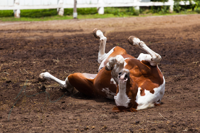 """Having fun in Sunnybrook Stables park, Toronto. Axel is the horse  <a href=""""http://www.sunnybrookstables.ca/horses.html"""">http://www.sunnybrookstables.ca/horses.html</a>)"""