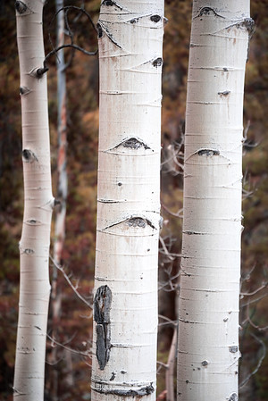 Three Aspens
