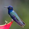 Hummingbird at Dave  & Dave's Nature Park