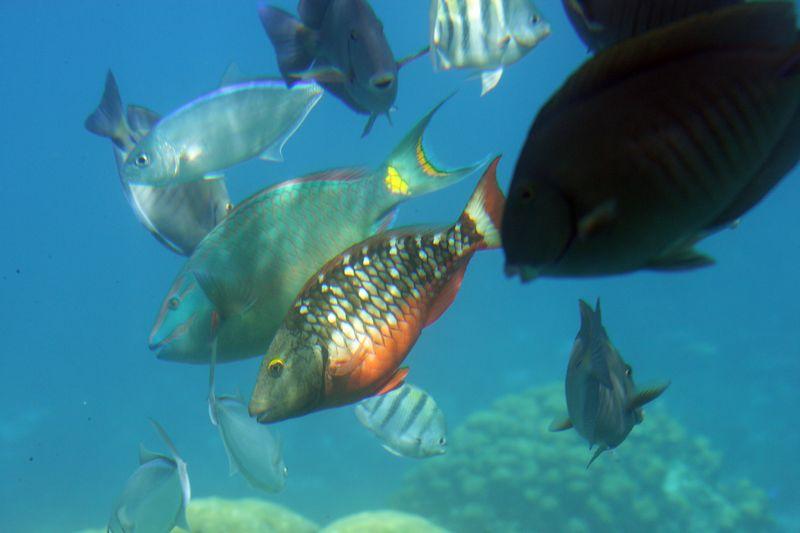 Cozumel 02-Mar-2005- 2370