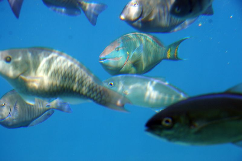 Cozumel 02-Mar-2005- 2428