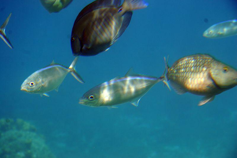 Cozumel 02-Mar-2005- 2427