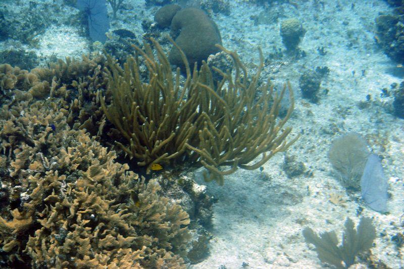 Cozumel 02-Mar-2005- 2424