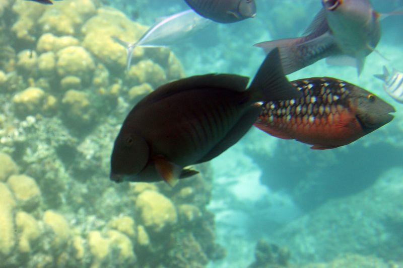 Cozumel 02-Mar-2005- 2371