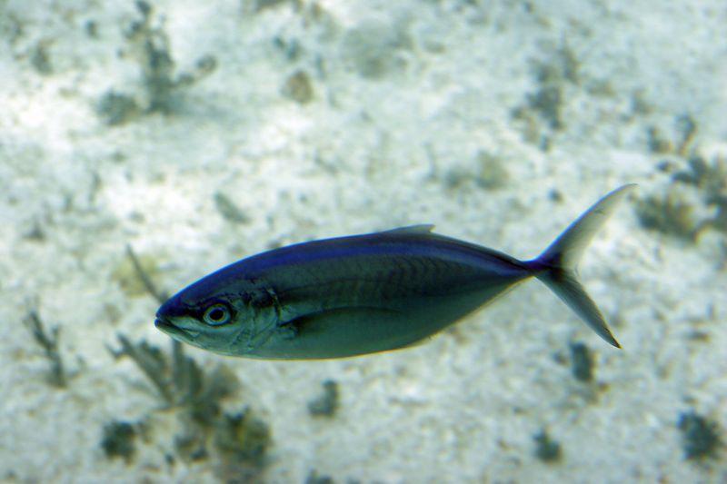 Cozumel 02-Mar-2005- 2425