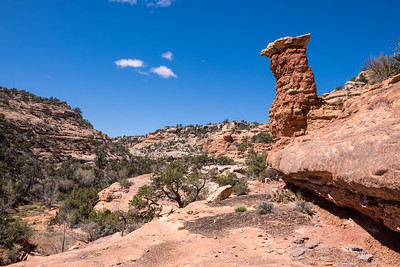 Hoodoo in Road Canyon on Cedar Mesa