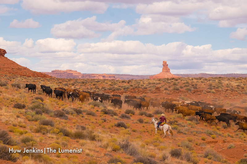 Cattle Drive in the Valley of the Gods