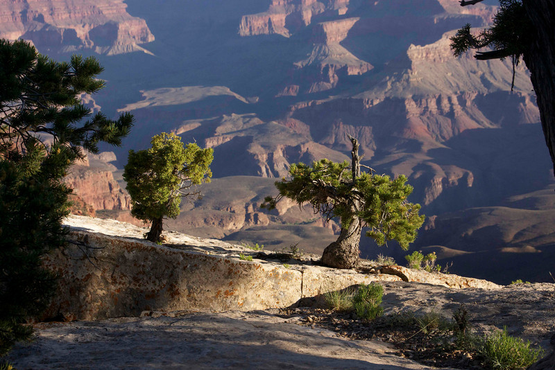 Morning on the South Rim