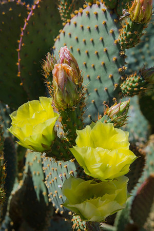 Spring Flowers in the Desert Southwest