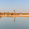 A lonely tree surviving the heat in the desert of Al Qudra, Dubai, UAE with its reflection in the lake water.