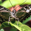 Butterfly macro closeup