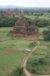 Farming amongst the ruins, Bagan