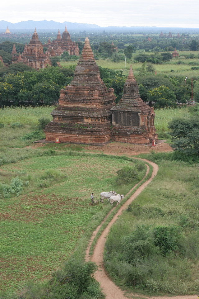 Farming amongst the ruins, Bagan
