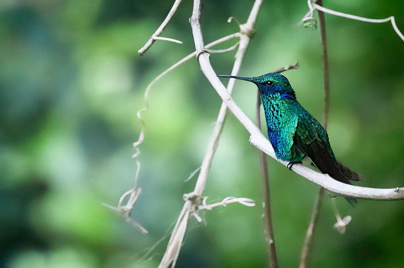 Casa Verde Ecco Lodge Humming Bird