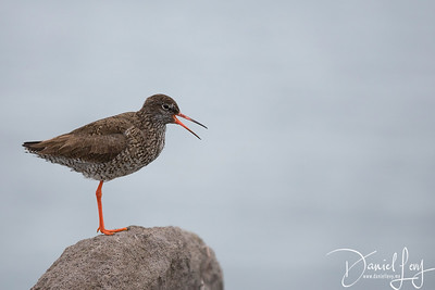 The Friendliest Bird