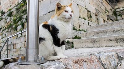 Olympian Cat