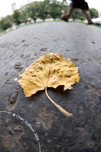 Autumn is here; a leaf on the pavement near house of parliament. Budapest, Hungary, 2008.