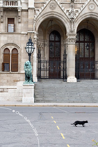 House of Parliament entrance; A cat goes by the big statue of a lion. Budapest, Hungary, 2008.
