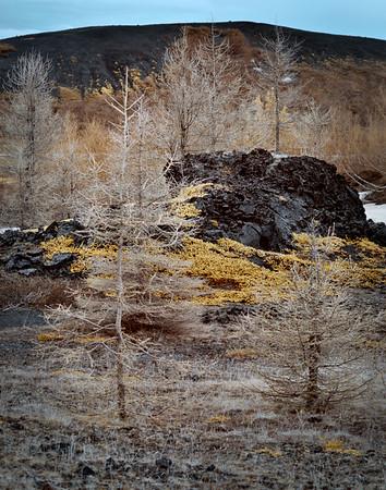 Myvatn Forest