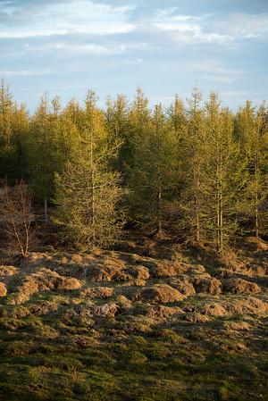 Eyvindara Trees