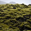 Eldhraun, Iceland Largest lava field ever to flow on earth in historical time. This is ancient moss that has grown on the lava. Pillow moss