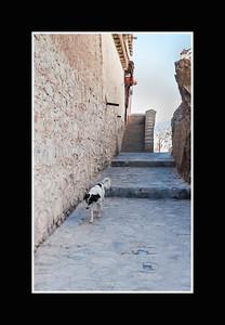 dog walkway_DSC2861