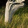 Drift wood as abstract art.