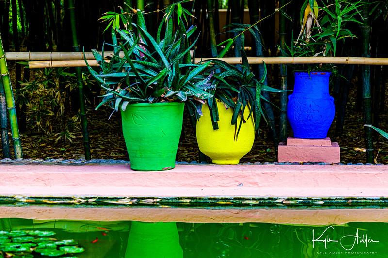 In the lovely Majorelle Gardens in Marrakesh.
