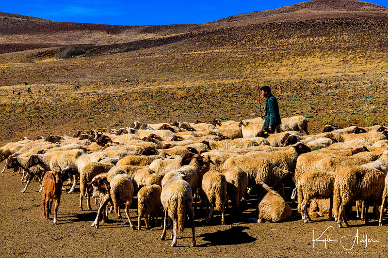 Traveling through the Middle Atlas Mountains, we chanced to meet Abdul, a 17-year-old boy who, along with his family, grazes more than 300 sheep, driving them from one remote pasture to another.