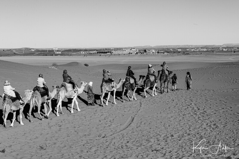 Approaching town and the end of our dromedary excursion.