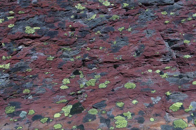 Lichen adorns a red rock.