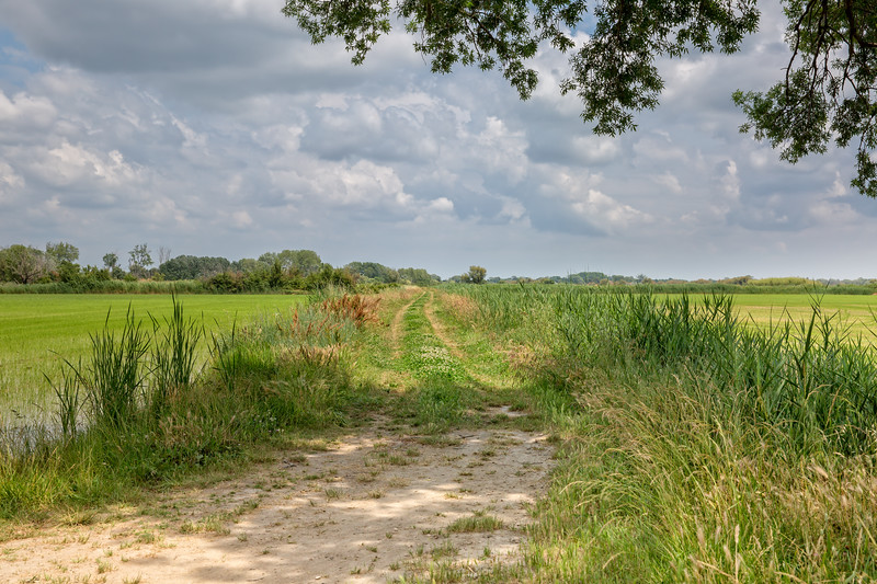 Rural road between the rice fields in Camargue