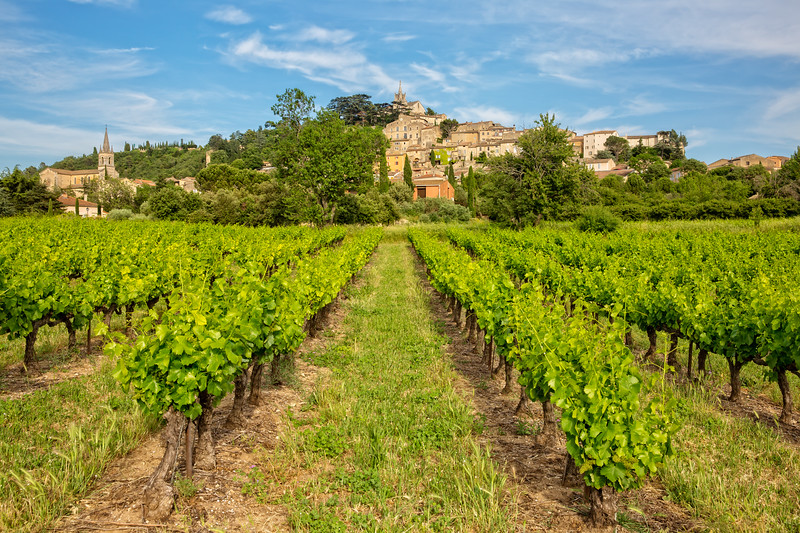 Vineyard in Bonnieux