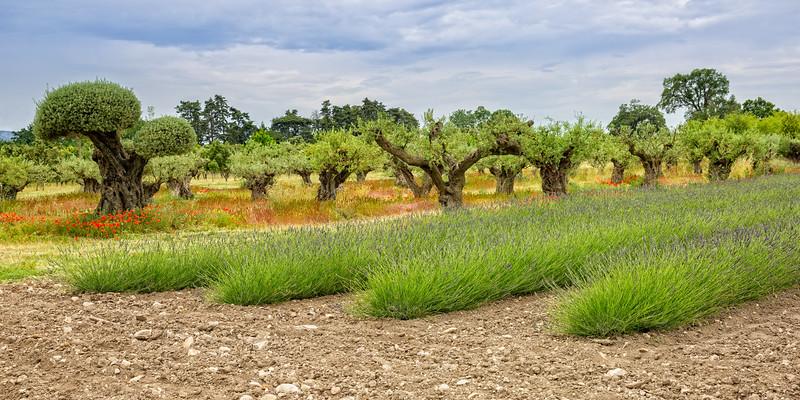 Mediterranean garden in Provence