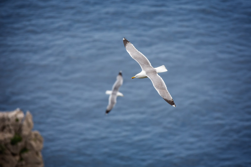 Large white water birds flying over the blue sea