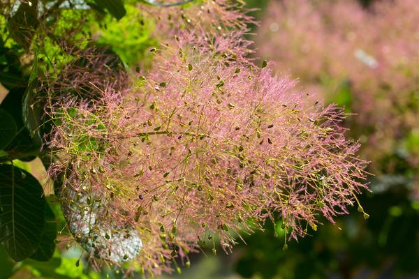 Blühende Zweige - Flowering branches