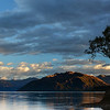 "Famous ""Wanaka Tree"", likely most photographed tree in New Zealand."