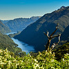 Doubtful Sound (fiord) from Wilmont Pass.