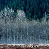 Quinault River, Quinault Lake, Olympic National Park, Washington