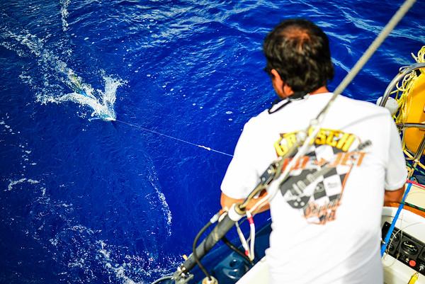Mahi Mahi sailboat fish tacos Pacific Ocean-1