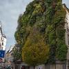 Mur Vegetal de Patrick Blanc - Hanging Garden