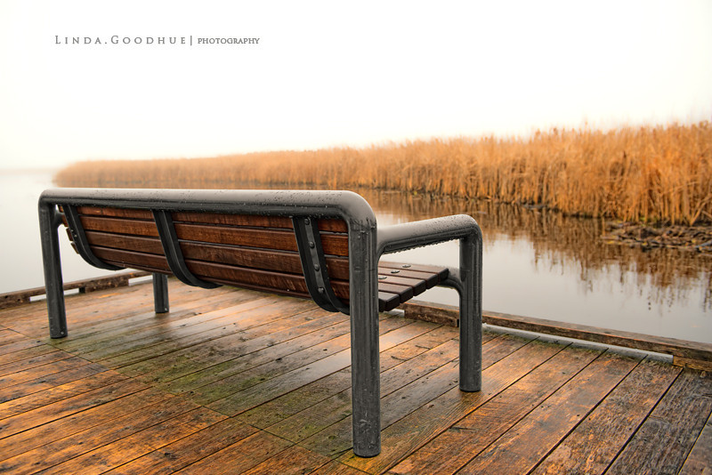 Bench at Marsh BoardwalkPark in the fog