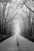 Road in Point Pelee National Park in the fog