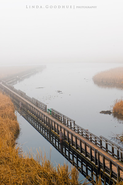 Marsh Boardwalk in the fog