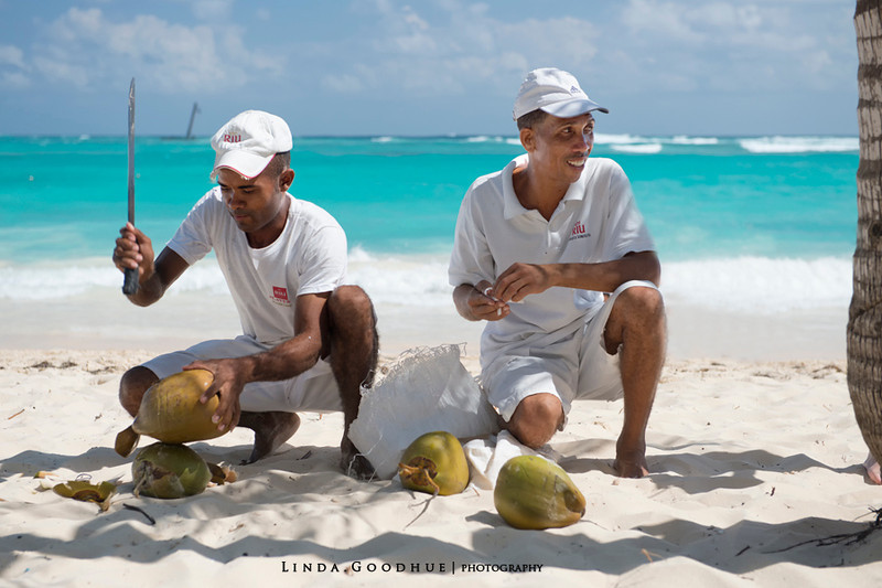 Coconuts on Riu Palace Resort beach, Punta Cana, Dominican Republic