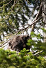 Porcupine. Lake Louise